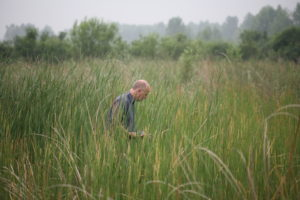 Rob McInnes Wetland Typha