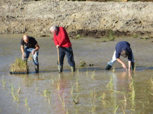 Volunteers from the Norfolk Rivers Trust planting the Frogshall Wetland