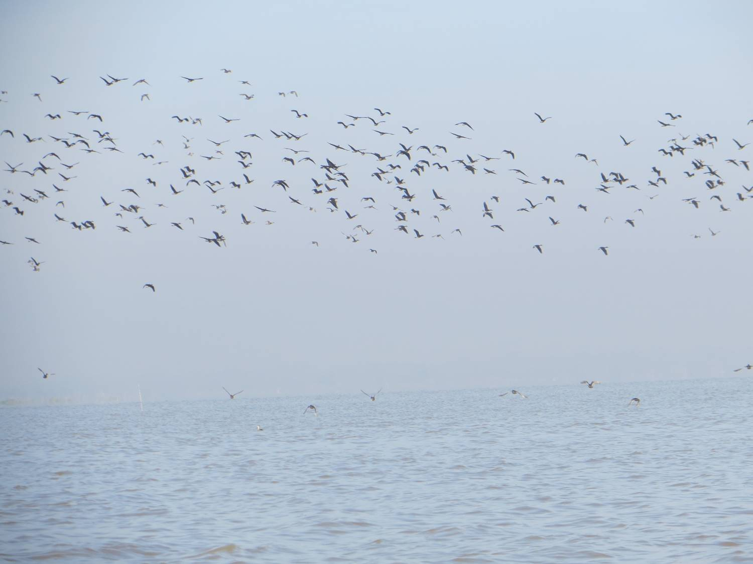 Waterbirds at Moeyungyi